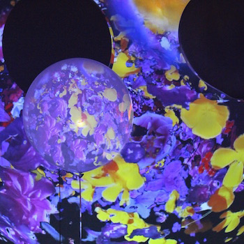 image of flowers projected onto balloons