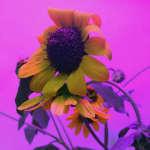 photo of a flower against a pink background